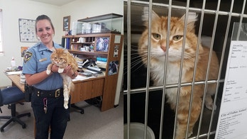 Pet cat disappears from owner's Montana home, reappears over a year later in Nevada