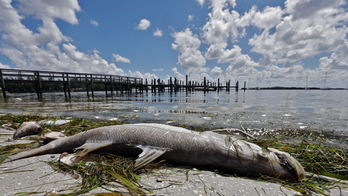 Experts: Hurricane Michael failed to end Florida's red tide