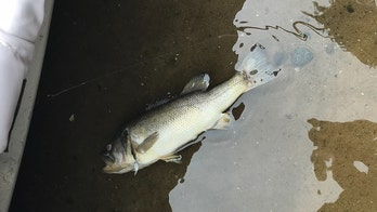 Michigan officials say largemouth bass virus confirmed in lake