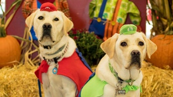 The Daily Spike: Halloween (and HOWL-oween) safety tips for dogs