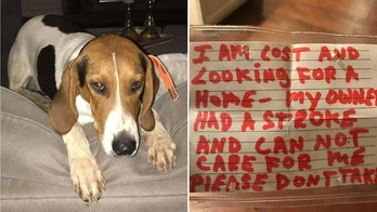 Michigan puppy abandoned, found wandering with note: 'Please find home'