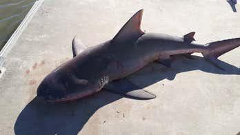 6-foot bull shark leaps into family fishing boat, 'petrifies' kids