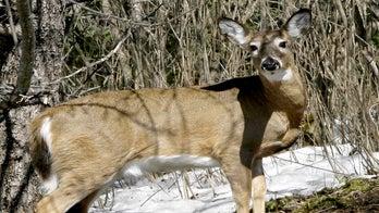 VIDEO: Police officers help free deer caught in fence