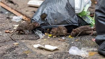 Rat-spread Lassa virus that causes uncontrolled bleeding kills over 100 in Nigeria