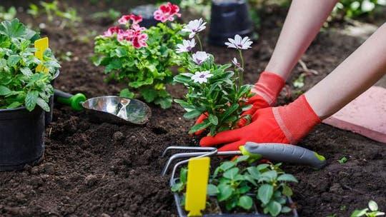 When to plant flowers each season