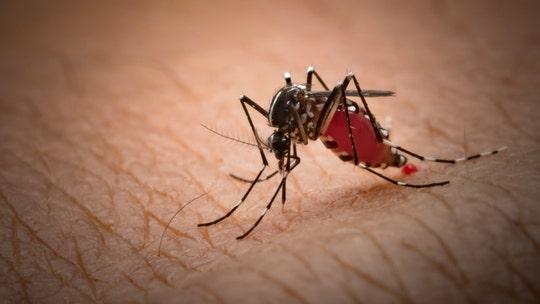 Man's bug bite led to flesh-eating bacteria infection