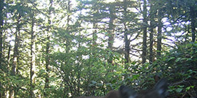 The cougar was killed four days after authorities found Diana Bober's body.