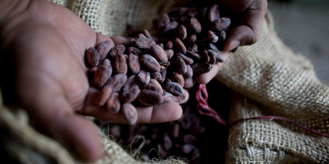 A paper published Monday, Oct. 29, 2018 says tests indicate traces of cacao on artifacts from a South American archeologic site estimated to be 5,400 years old. (AP Photo/Ariana Cubillos)