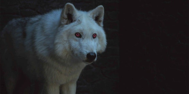 "Jon Snow's direwolf Ghost (pictured) is set to make his ""Game of Thrones"" comeback."