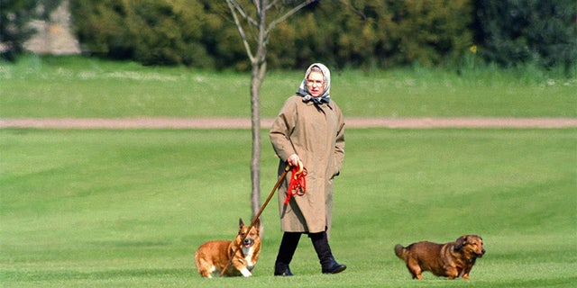 Queen Elizabeth II walking her dogs at Windsor Castle, on April 2, 1994 in Windsor, United Kingdom.