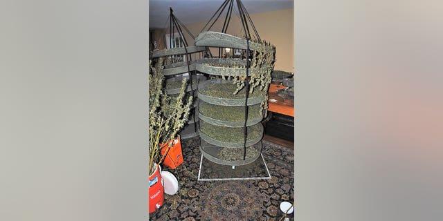 Police said they also found trays holding drying marijuana.