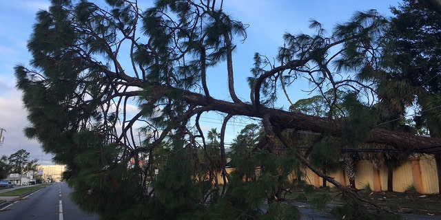 Trees lay strewn in Panama City Beach, Fla. after Hurricane Michael bore through the area.