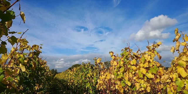 The cloudformation was photographed over Sandhurst Vineyard (SWNS)