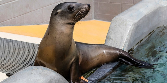The Marine Mammal Center said this outbreak is the second-largest recorded by the center.