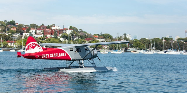 The new co-owner of Sydney Seaplanes said in a recent interview the current belief is that a passenger accidentally knocked out the pilot, possibly while taking a photo.