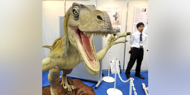 File photo - A robotic Velociraptor dinosaur opens its mouth to scare visitors as it demonstrates the power of air pressure at the fluid power exhibition in Tokyo on April 22, 2008. The dinousaur, produced by Japanese robotic venture Kokoro, has an infrared sensor to detect passersby.