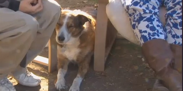 """The couple told FOX28 it was """"either Alex found a new home or we stopped using meth,"""" and that there was no way they could have gotten rid of their four-legged addition."""