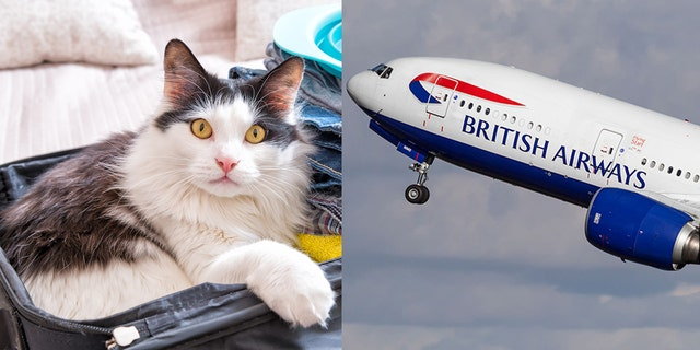 Once the cabin crew discovered the furry feline, the woman was kicked off the plane.
