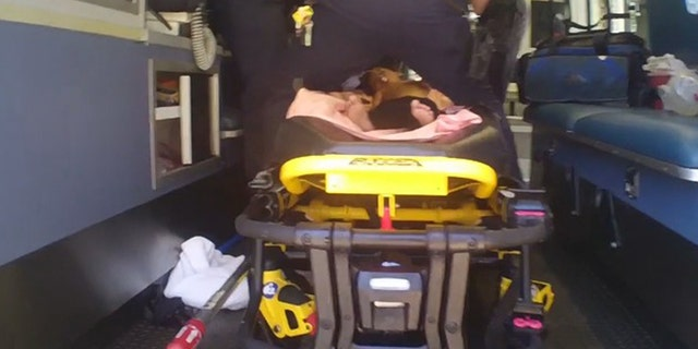 The two officers arrived at the home before paramedics, and were able to quickly jump into action to perform CPR on the boy.