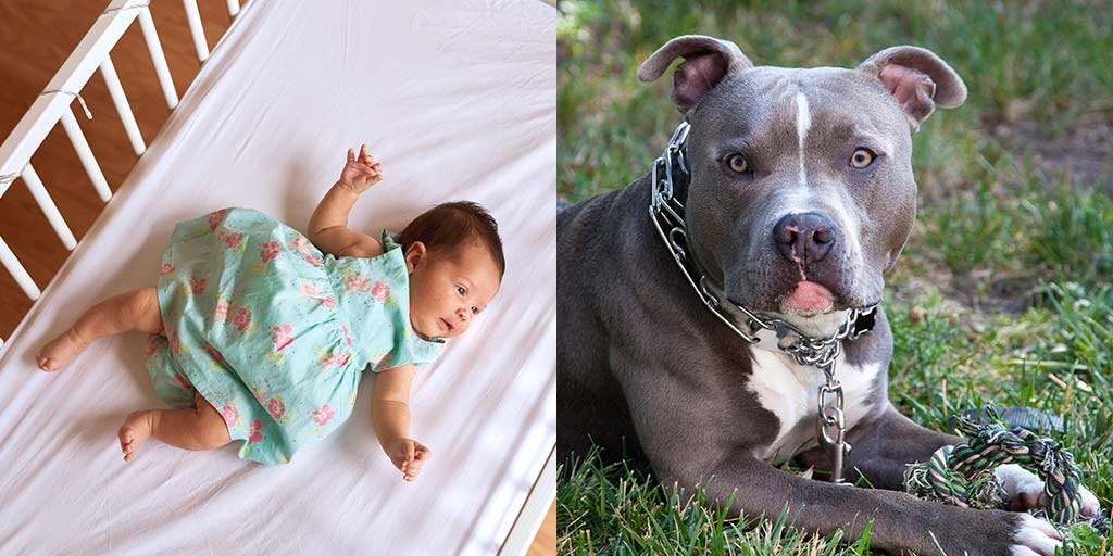 Florida infant dies after being attacked by pit bull in crib