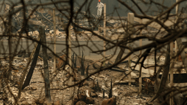 The Latest: Fire looting suspects arrested in N. California
