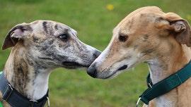 Coronavirus pandemic could negatively impact pets' mental health, vet says