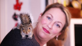 Rescued squirrel becomes part of woman's family, stashes nuts in her hair: 'He's so funny'