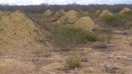 Massive 4,000-year-old termite mounds can be seen from space