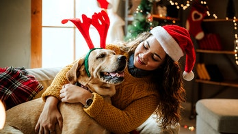 5 pet gifts for the good doggo in your life