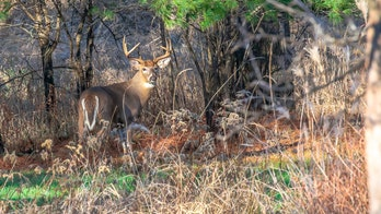 Chronic wasting disease spreads in Wisconsin: Should humans be concerned?