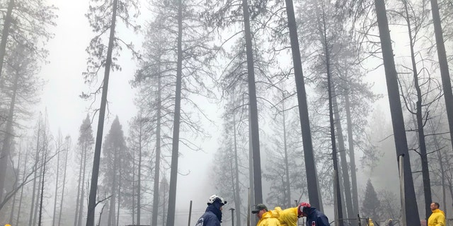 After a brief delay to let a downpour pass, volunteers resume their search for human remains at a mobile home park in Paradise, Calif., Friday, Nov. 23, 2018. (AP Photo/Kathleen Ronayne)