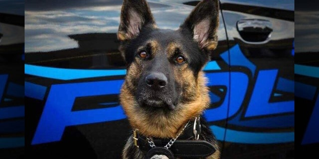 Axe, a 4-year-old K-9 with the St. Clair Shores Police Department, was killed in the line of duty Sunday.