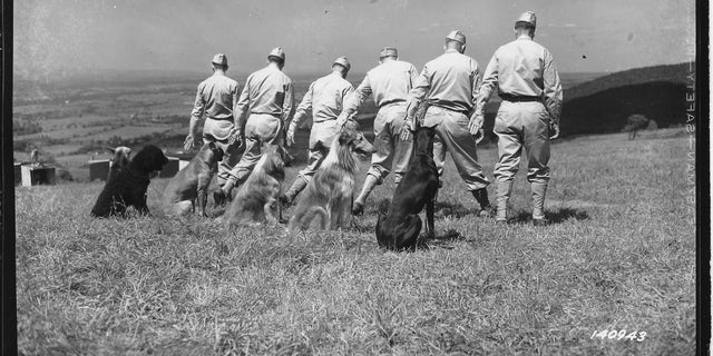 Veterans Day: 75 years later, WWII Marine Corps war dog