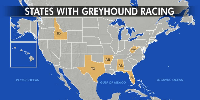 The Sunshine State has more racing greyhounds than any other and is home to 11 of the nation's 17 active dog tracks in five other states: Alabama, Arkansas, Idaho, Texas and West Virginia.