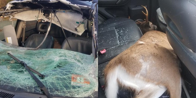 Melissa Misthal, of Howell, narrowly avoided death when she hit a deer that smashed through her windshield and landed in the back seat of her car.