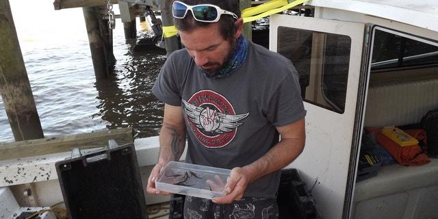 "Atlantic sturgeon were ""once-plentiful"" in the James River."