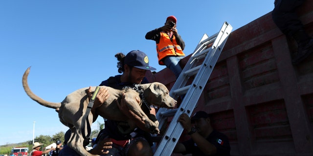 A Central American migrant, part of the caravan hoping to reach the U.S. border, carries his dog into a dump truck, on their way to Mazatlan, Mexico, Tuesday, Nov. 13, 2018.