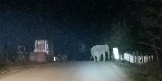 State police said the elephant got lost after wandering away from an animal sanctuary.