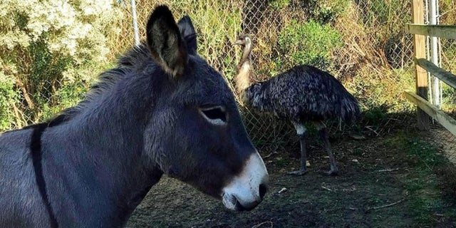 The animal shelter fears Jack and Diane will not be adopted.