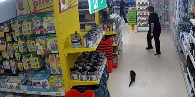 "The expert ""is now nursing him back to health with all her other animals,"" the store manager said."