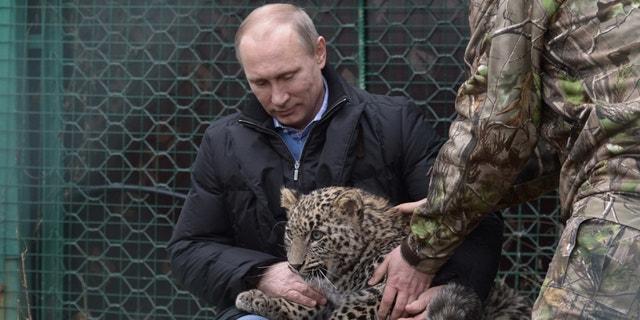 President Putin patting a leopard