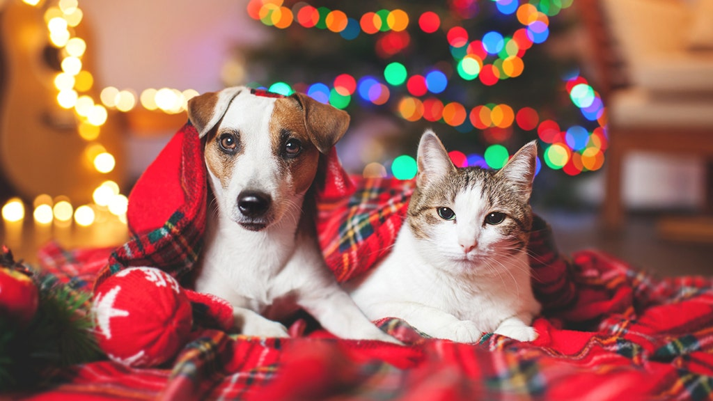 Are Christmas trees safe for dogs and cats? What to know about the  potentially hazardous holiday staple | Fox News - Are Christmas Trees Safe For Dogs And Cats? What To Know About The