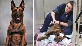 Georgia K-9 that lost eye after being shot in head is released from hospital