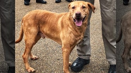 Retired Mississippi police dog rescued from animal shelter as handler gets demotion