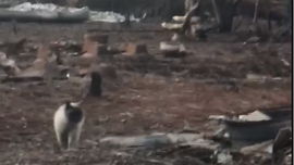 California woman's cat found waiting at wildfire-ravaged property: 'You made it!'
