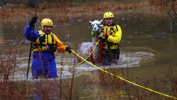Llama rescued from heavy floodwaters in Maryland