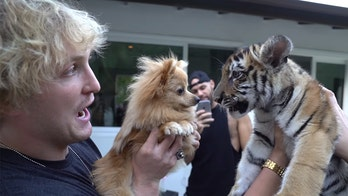 Logan Paul's tiger cub YouTube video leads to charges against California man