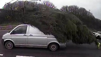 Driver caught with hilariously large Christmas tree on top of van
