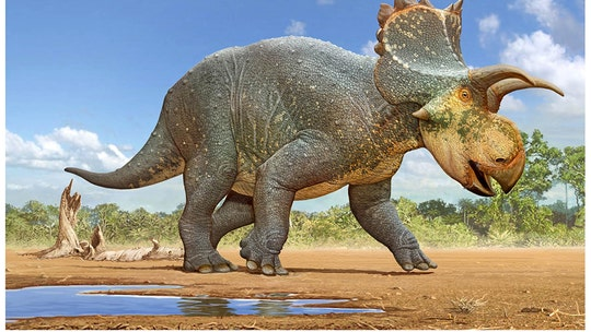 New horned dinosaur species discovered in Arizona wows paleontologists