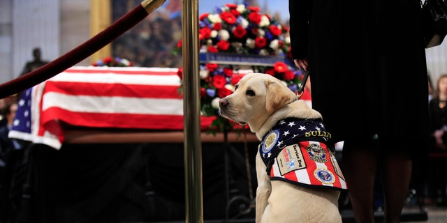 Sully, former President George H.W. Bush's service dog, pays his respect to the president as he lies in state at the U.S. Capitol.